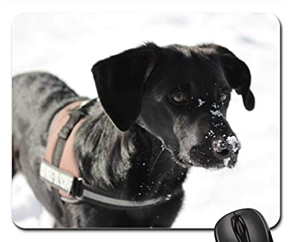 Amazon com : Mouse Pads - Dog Labrador Border Collie
