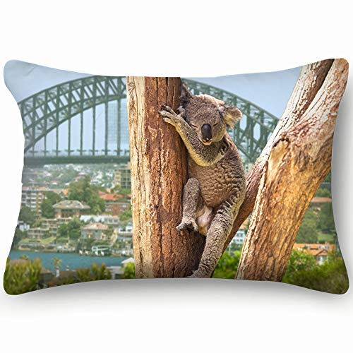 Cute Koala Sydney Australia Animals Wildlife Nature Skin Cool Super Soft and Luxury Pillow Cases Covers Sofa Bed Throw Pillow Cover with Envelope Closure 1624 Inch (The Best Sofa Bed Australia)