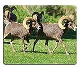 Liili Mouse Pad Natural Rubber Mousepad Desert Bighorn Sheep Rams Image ID 22510226