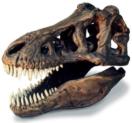 T-Rex Skull Large W/Stand (Tyrannosaurus Rex Skull)