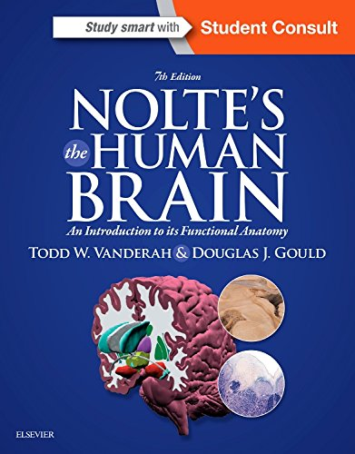 An introduction to the analysis of the human brain