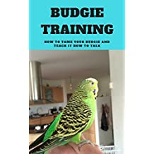 Budgie Taming and Training for Beginners