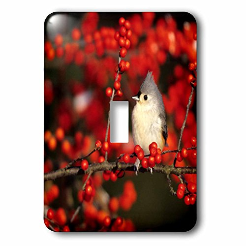 3dRose Danita Delimont - Birds - Tufted Titmouse in Common Winterberry in winter, Marion Co, Illinois - Light Switch Covers - single toggle switch (lsp_259299_1)