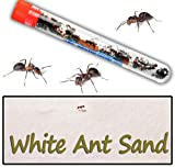 Nature Gift Store Live Ants for Ant Farms Plus Sand Refill Included, 10oz Sand