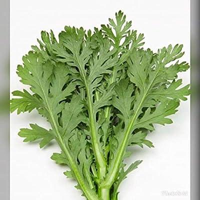 1/4 oz Medium Serrated Tong Ho/Hao 中切葉茼蒿 (ASF) Seeds, Edible Chrysanthemum; Shungiku Vietnamese Tần Ô, Rau Cú, Caỉ Cúc : Garden & Outdoor