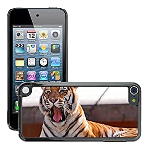 Hot Style Cell Phone PC Hard Case Cover // M00046364 sleepy tiger yawning animal rock wild // Apple iPod Touch 5 5G 5th