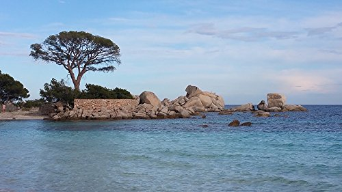 Corsican Four - Home Comforts LAMINATED POSTER Corsican Pine Beach Poster 24x16 Adhesive Decal