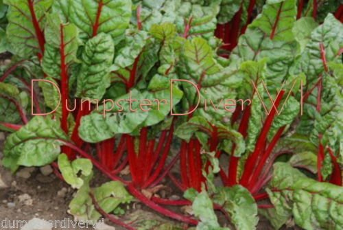 Ruby RED Swiss Chard Organic Heirloom 55 Days Sweet Tender 75+ Seeds Non-gmo