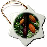 3dRose Cacao Pods, Hawaii Snowflake Ornament, 3''