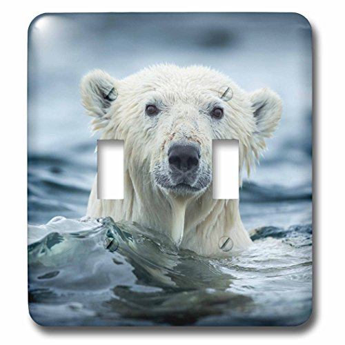 3dRose Danita Delimont - Bears - Canada, Repulse Bay, Polar Bear pokes its head above water. - Light Switch Covers - double toggle switch (lsp_257551_2) -