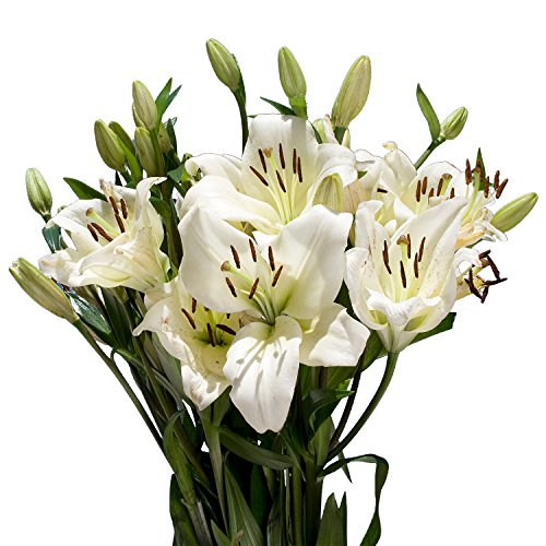 Best deals on flowers lillies products globalrose 20 fresh cut white asiatic lilie fresh long stem flowers mightylinksfo