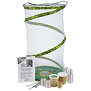 Classroom Butterfly School Kit  - 33 LIVE Caterpillars
