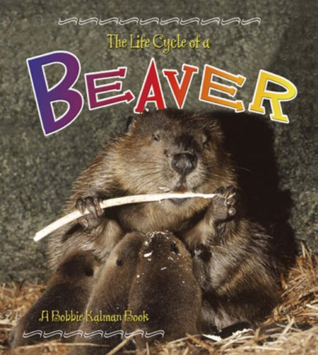 Beaver (Life Cycle of A...(Library)) pdf