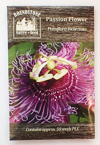 passion-flower-passiflora-incarnata-50-certified-pure-live-seed-true-native-seed