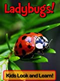 "Are your kids interested in Ladybugs? Awesome! You have found the right book. Help your children learn more about Ladybugs today by reading this book.Here is what is included inside ""Ladybugs! Learn About Ladybugs and Enjoy Colorful Pictures ..."