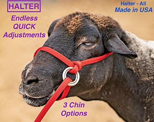 Halter-All Extra Small - Sheep, Goat, Small Calf Endless Adjustable Halter & Lead USA 250-700bs