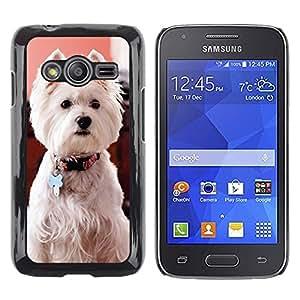 TopCaseStore / la caja del caucho duro de la cubierta de protección de la piel - West Highland White Terrier Dog Canine - Samsung Galaxy Ace 4 G313 SM-G313F