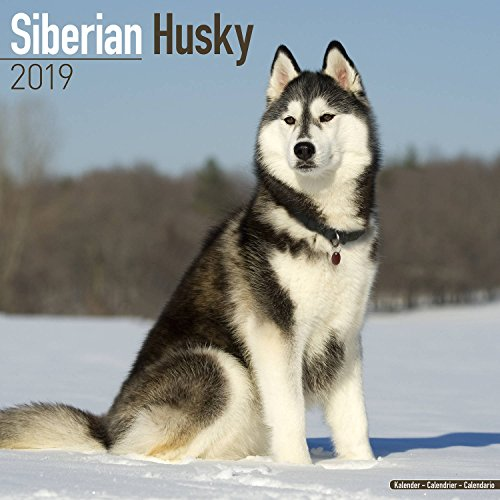 Siberian Husky Calendar 2019 - Dog Breed Calendar - Wall Calendar 2018-2019