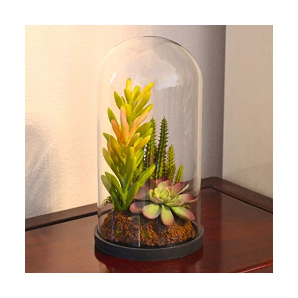 Glass Dome Bell Jar plant gift ideas
