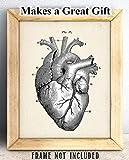 Anatomical Heart - 11x14 Unframed Art Print - Makes