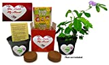 TickleMe Plant You Tickle My Heart Box - Share Growing The Plant That Closes its leaves when Tickled or When Blown a Kiss. It also Flowers