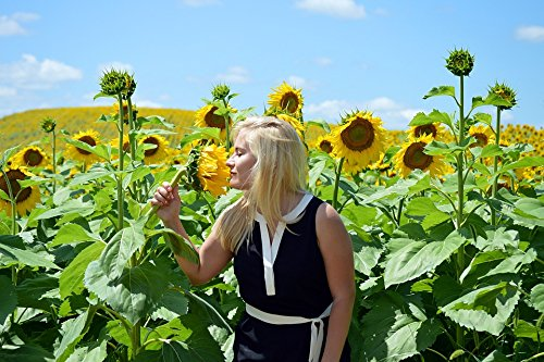 TED POSTER Field Summer Smell Girl Sunflowers Blond Poster 24x36 Decal (Blonder Home Sunflowers)