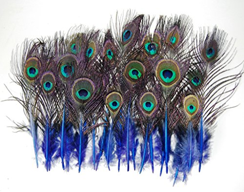 Mini Peacock Tail Feathers 4-12 Natural