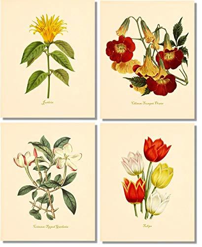 (Flower Wall Art- Vintage Botanical Prints (Set of 4) - 8x10 - Unframed - Justicia, Trumpet Flower, Gardenia,)