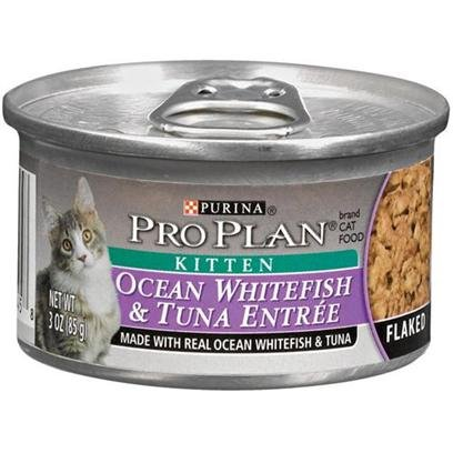 Nestle Purina Petcare Pro Plan Canned Ocean Whitefish and Tuna for Kittens Pro Plan Ocean Whitefish & Canned Food by Purina Waggin' Train
