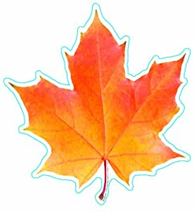 """Eureka Photo Image Of A Fall Leaf, 5"""" Paper Cut-Outs, Package of 36"""