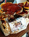 Reishi Mushroom Kit - Indoor Mushroom Growing Kit - Grow Edible Mushrooms & Fungi. Easy & Fun Mush Room Grow Kits