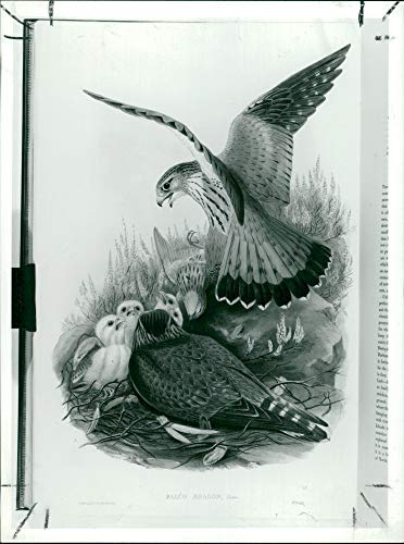 Vintage photo of Works by John Gould.