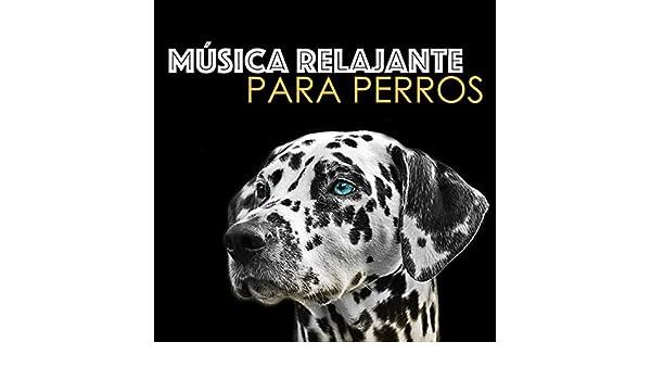 Música Relajante para Perros - Musicoterapia para Perro, Gato y Mascotas by Música Relajante para Perros on Amazon Music - Amazon.com