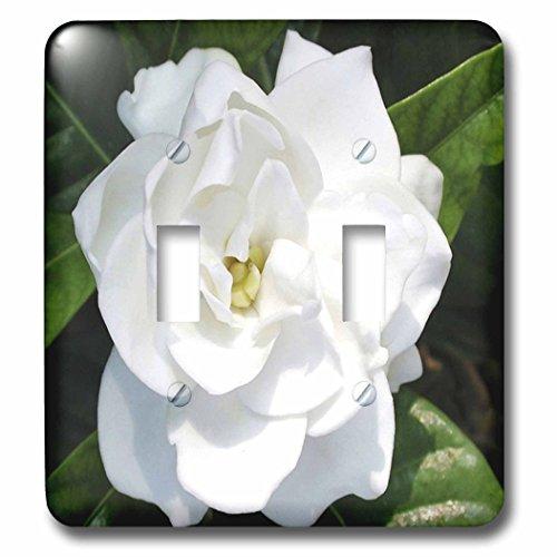 3dRose LSP_58584_2 Gardenia Double Toggle Switch, White - Gardenia Clock Plate