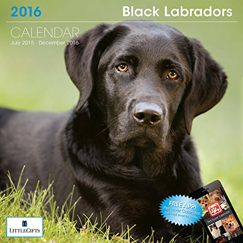 LittleGifts Black Lab 2016 Calendar (1228)