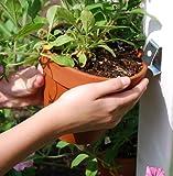 terracotta flower pots - Flower Pot Klips (12 Pack)