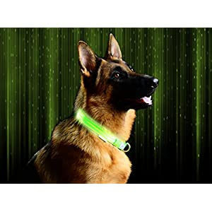 Pet Industries Metal Buckle LED Dog Collar, USB Rechargeable, Available in 7 Colors & 4 Sizes (Large [18.5-23.5/47-60 cm], Atomic Green)