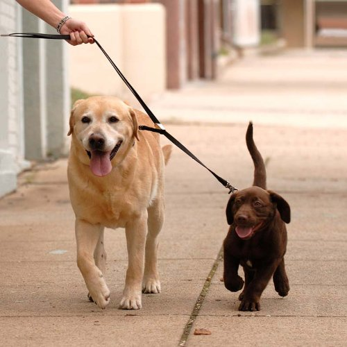 Sporn Douple Dog Coupler Black, X-Small, My Pet Supplies