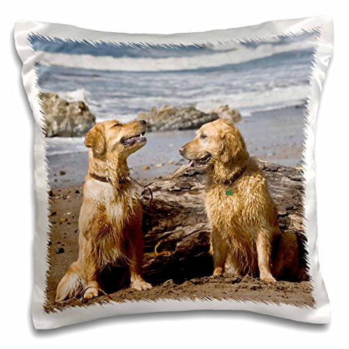danita-delimont-dogs-two-golden-retriever-dogs-in-california-us05-zmu0306-zandria-muench-beraldo-16x
