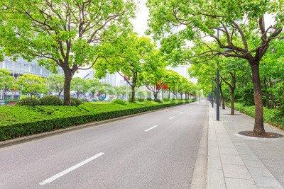 AluminiumDibond 80 x 50 cm AluminiumDibond image 80 x 50 cm   Trees decorated road in modern city , image on a AluminiumDibond