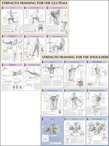 Amazon Strength Training Anatomy Poster Series Home Kitchen