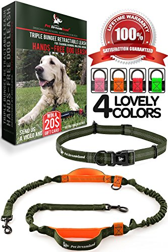 Hands Free Leash for Walking - One/Two Medium to Large Dogs (up to 150lbs) - Shock Absorbing Bungee Dog Leashes - Reflective Waist Dog Running Leash - Dog Harness for Running (One Dog, Khaki & Orange) by Pet Dreamland