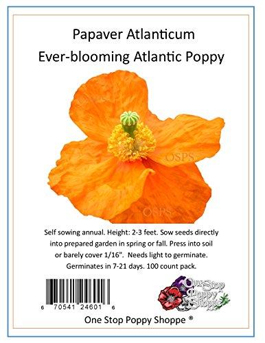 - 100 Poppy Flower Seeds Everblooming Atlanticum Poppies. One Stop Poppy Shoppe® Brand.