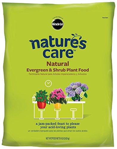 Miracle Gro Natures Natural Evergreen Shrub product image