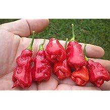 TRINIDAD Scorpion,SWEETS Pepper Seeds ,Organic, C.chinense,Heirloom.(25 Seeds)