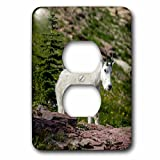 3dRose Danita Delimont - Goats - Mountain Goat on the hillside. Glacier National Park. Montana. Usa. - Light Switch Covers - 2 plug outlet cover (lsp_279226_6)