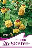 Acmella Oleracea Toothache Plant Perennial Flowering Seeds, Original Pack, 30 Seeds/Pack, Paracress Garden Seeds A221