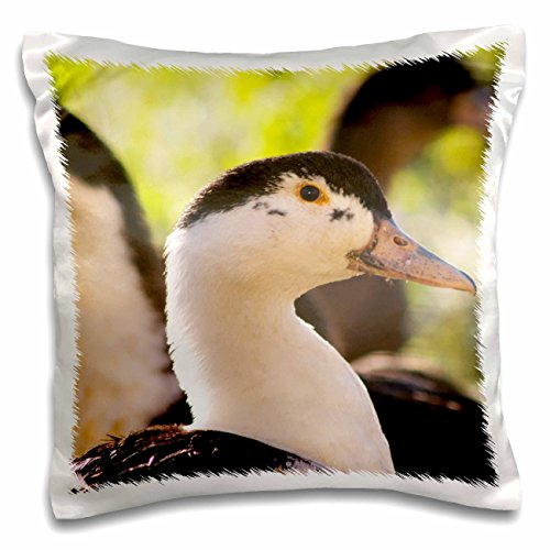 Danita Delimont - Ducks - Ferme de Biorne duck and fowl farm Dordogne, France - EU09 PKA1167 - Per Karlsson - 16x16 inch Pillow Case (pc_81591_1) - Ferme De Biorne Duck