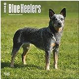 Blue Heelers Calendar