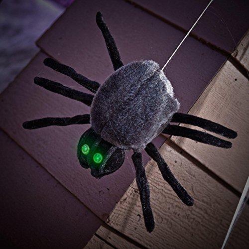 Dropping Dan Spider (Standard) by Sunstar Industries